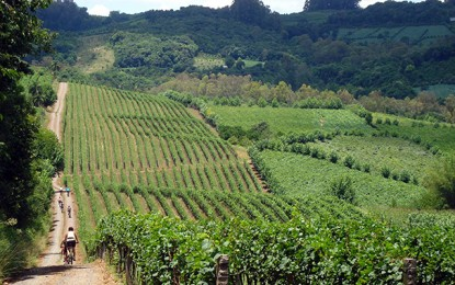 Serra Gaúcha vai receber o evento Wine Bike em novembro
